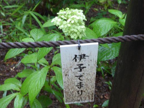 aijisai-03.jpg
