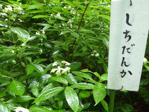 aijisai-06.jpg