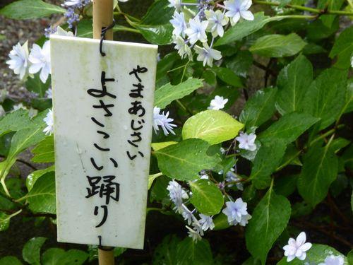 aijisai-08.jpg