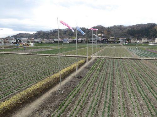 hanami-01.jpg