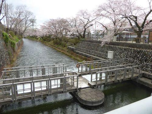 hanami-03.jpg