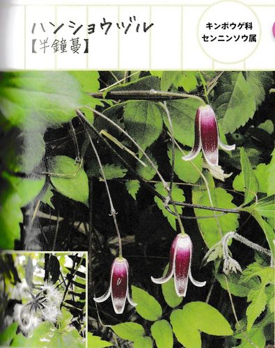 takaohon-02.jpg