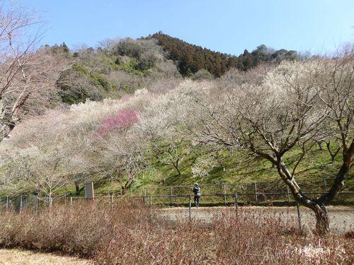 takaoume-05.jpg